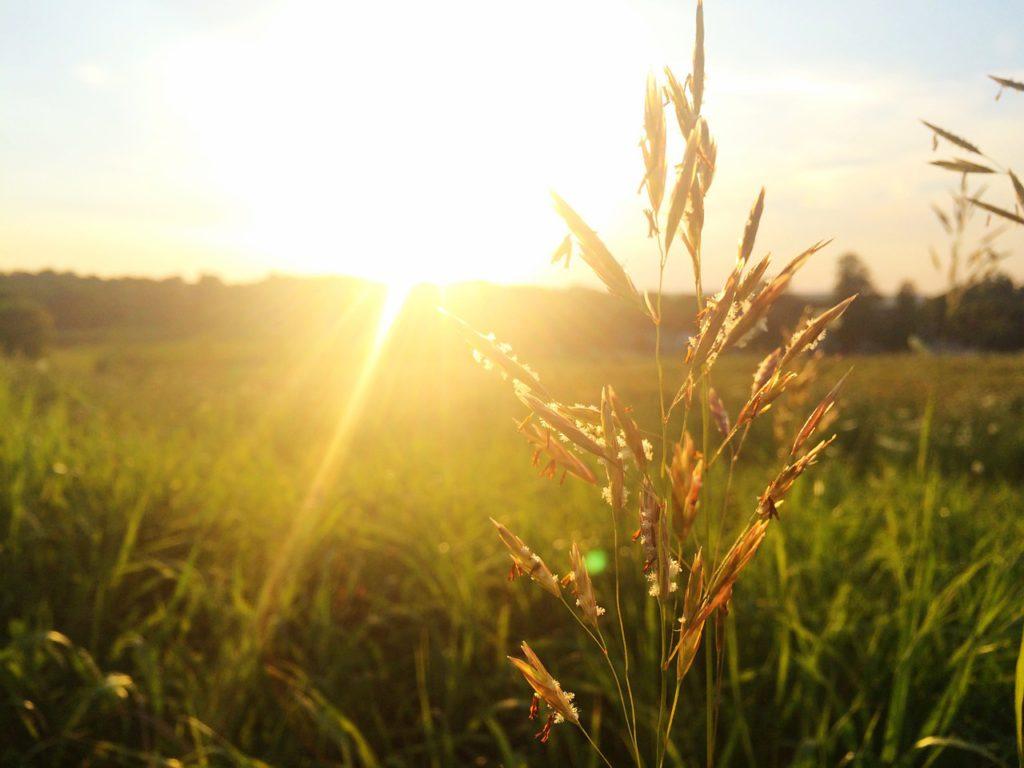 grass-828909_1280